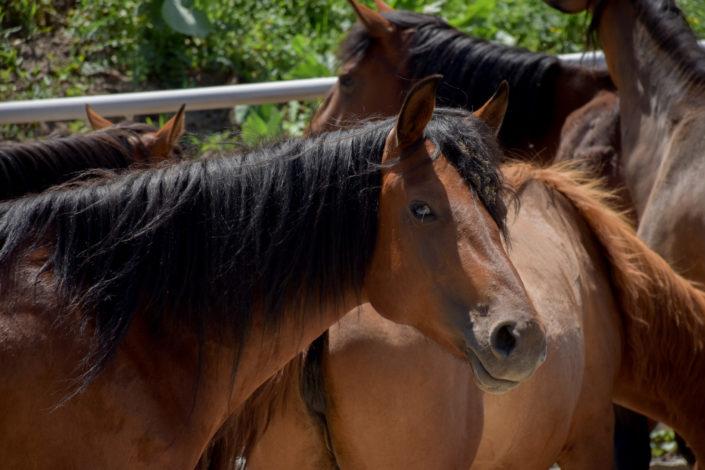 лошади, конные прогулки